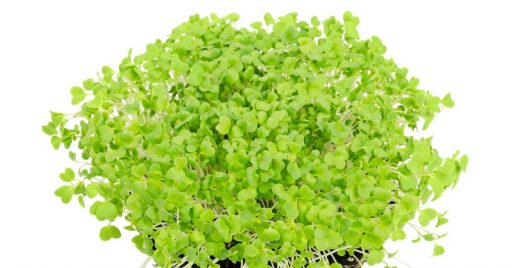 Ingredientes de la ensalada de mizuna